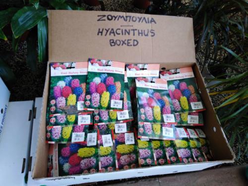 Bulbs Seeds