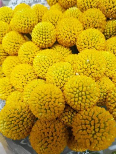 Μεσογειακά φυτά