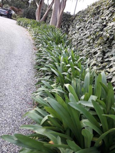 Τροπικά  φυτά