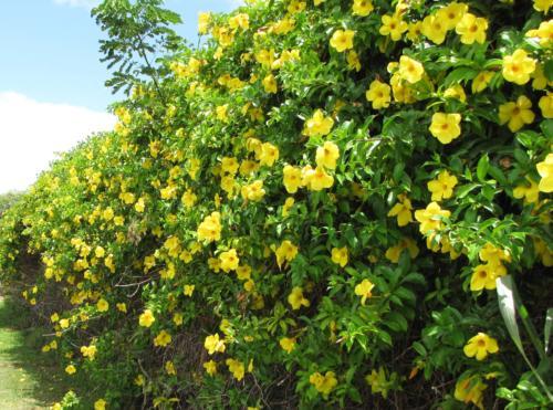 Φρακτικά φυτά